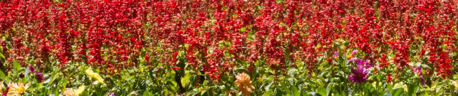 Flores en una rotonda de los Jardínes del Príncipe de Aranjuez, España