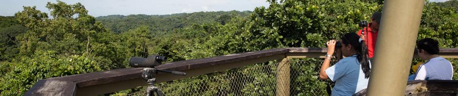 Visitantes en la torre de observación del Panama Rainforest Discovery Center